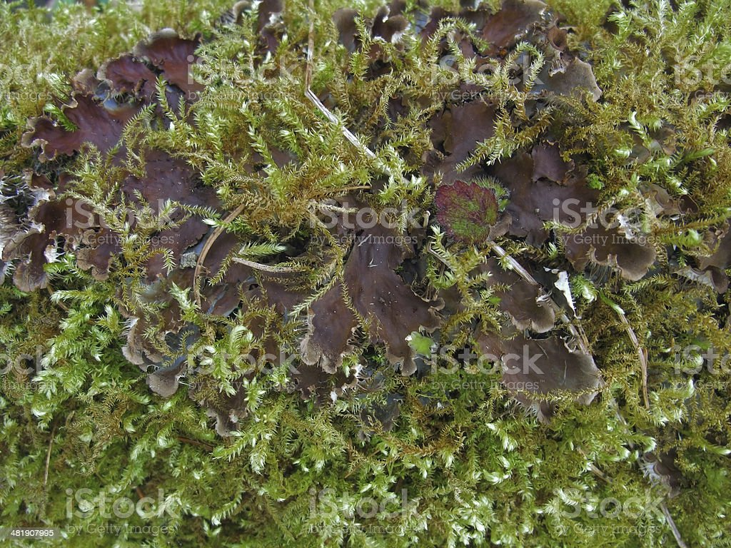 moss and mushroom royalty-free stock photo