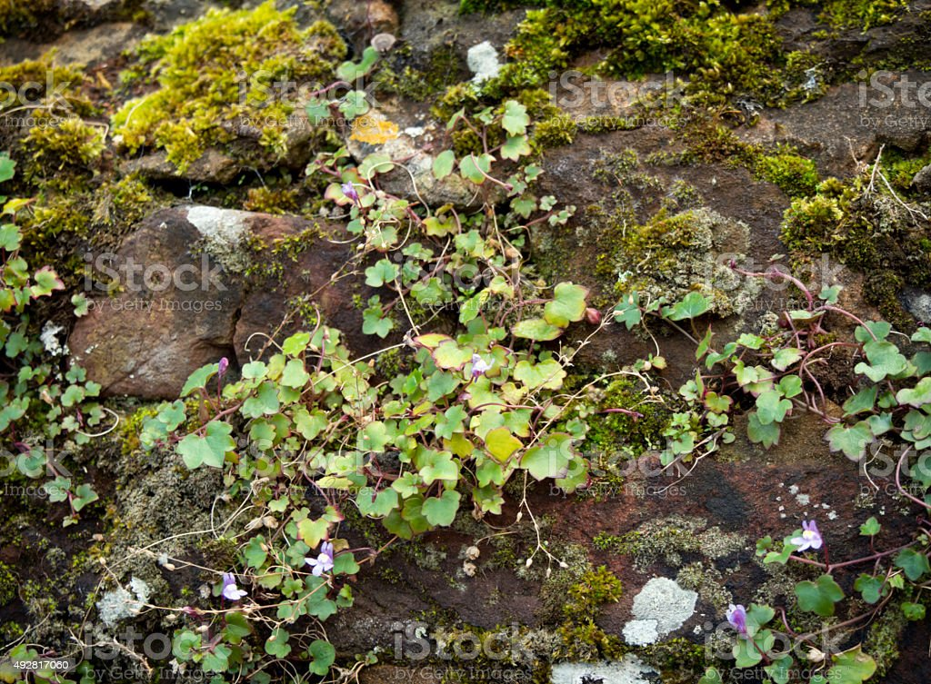 Moss and wild flowers growing on a wall stock photo