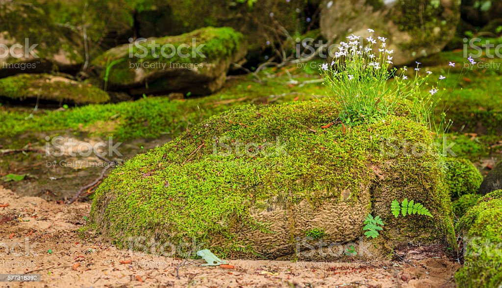 Moss and wildflowers stock photo