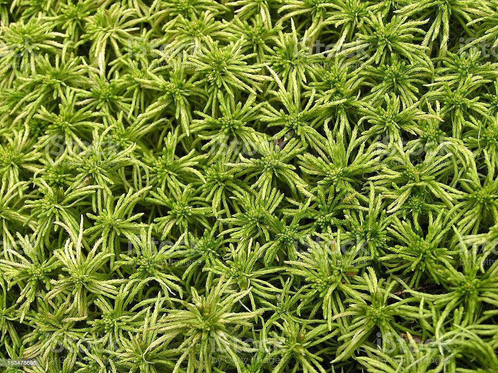 Moss background stock photo