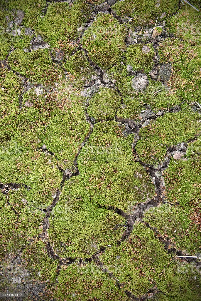 moss background royalty-free stock photo