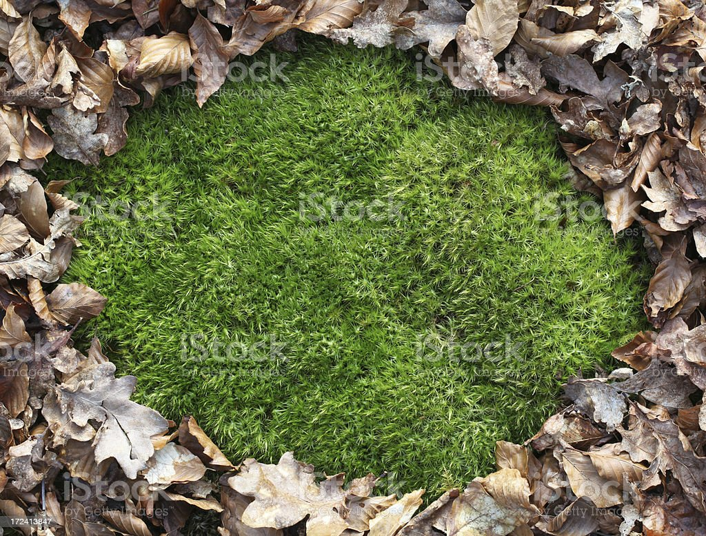 Moss Background with leaf border royalty-free stock photo