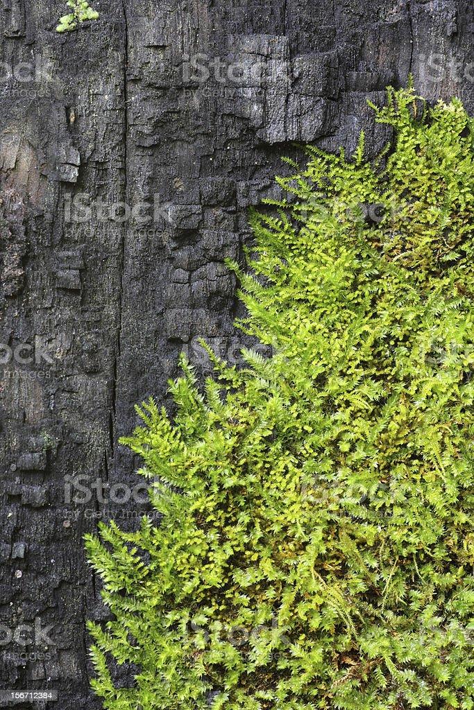 moss bark tree royalty-free stock photo