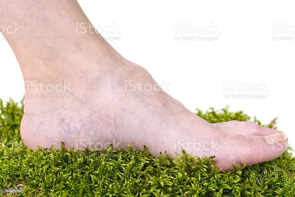 moss bed royalty-free stock photo