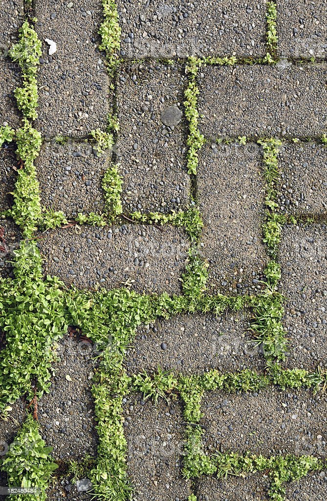 Moss between the Bricks royalty-free stock photo