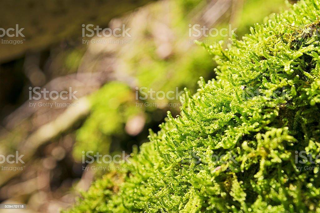Moss Breitenstein Bavaria Alps stock photo