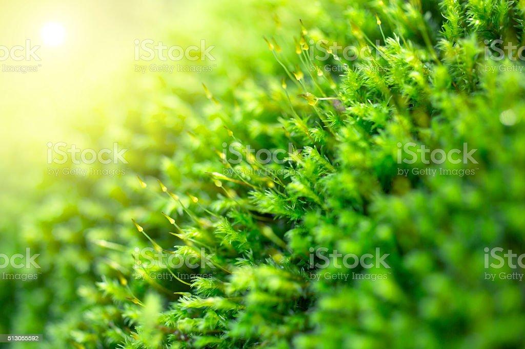 Moss close up stock photo