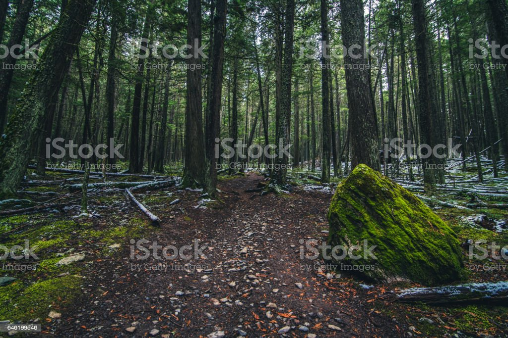 Moss covered forest floor stock photo