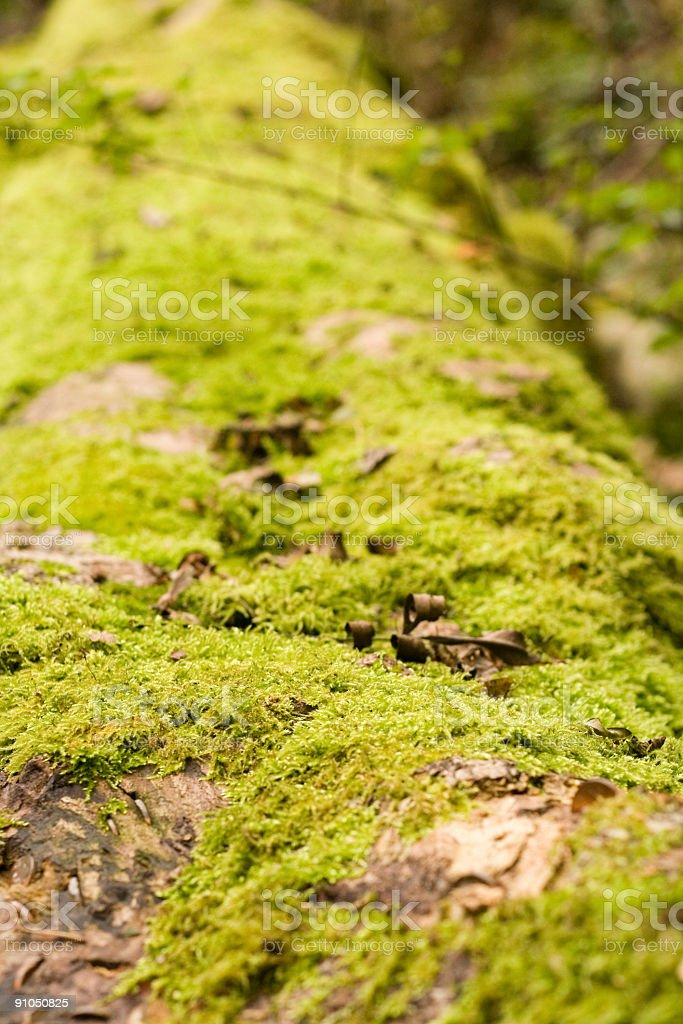 Moss Covered log with shallow dof stock photo