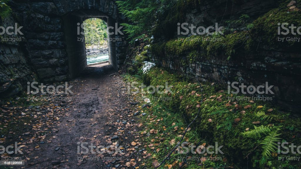 Moss covered road. stock photo