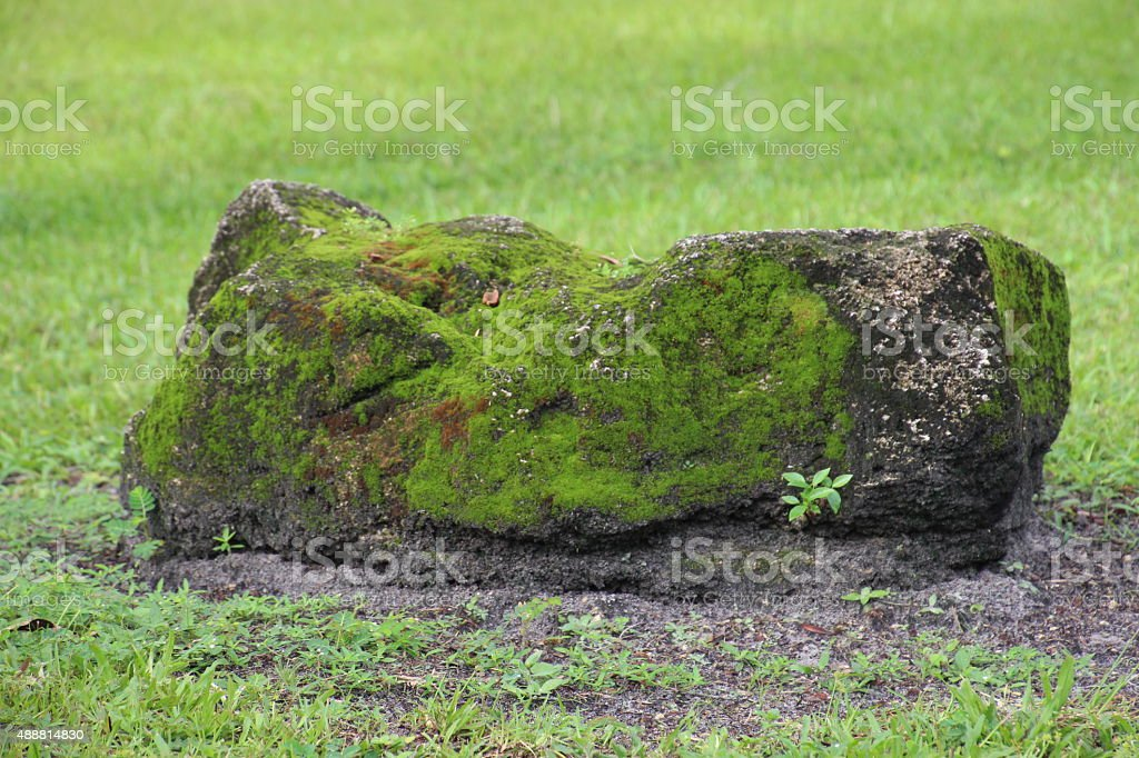 moss covered rock stock photo