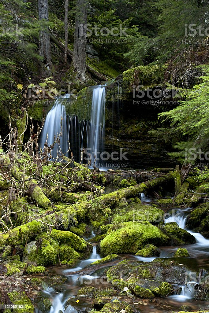 Moss covered rocks in stream. royalty-free stock photo