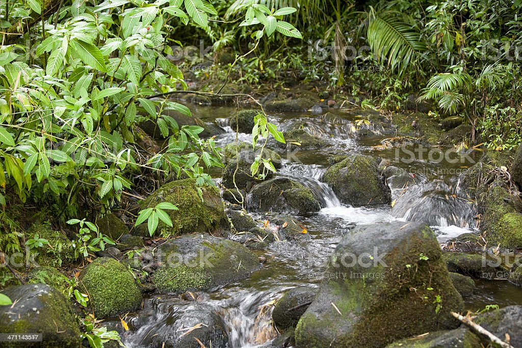 Moss covered rocks in stream royalty-free stock photo