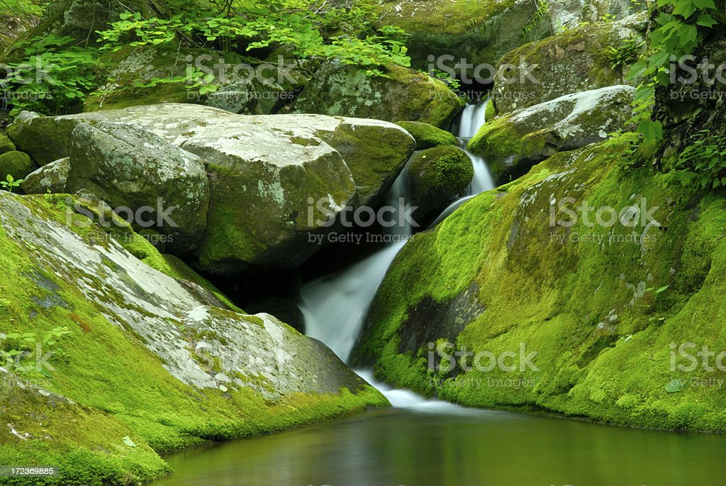Moss Covered Rocks royalty-free stock photo