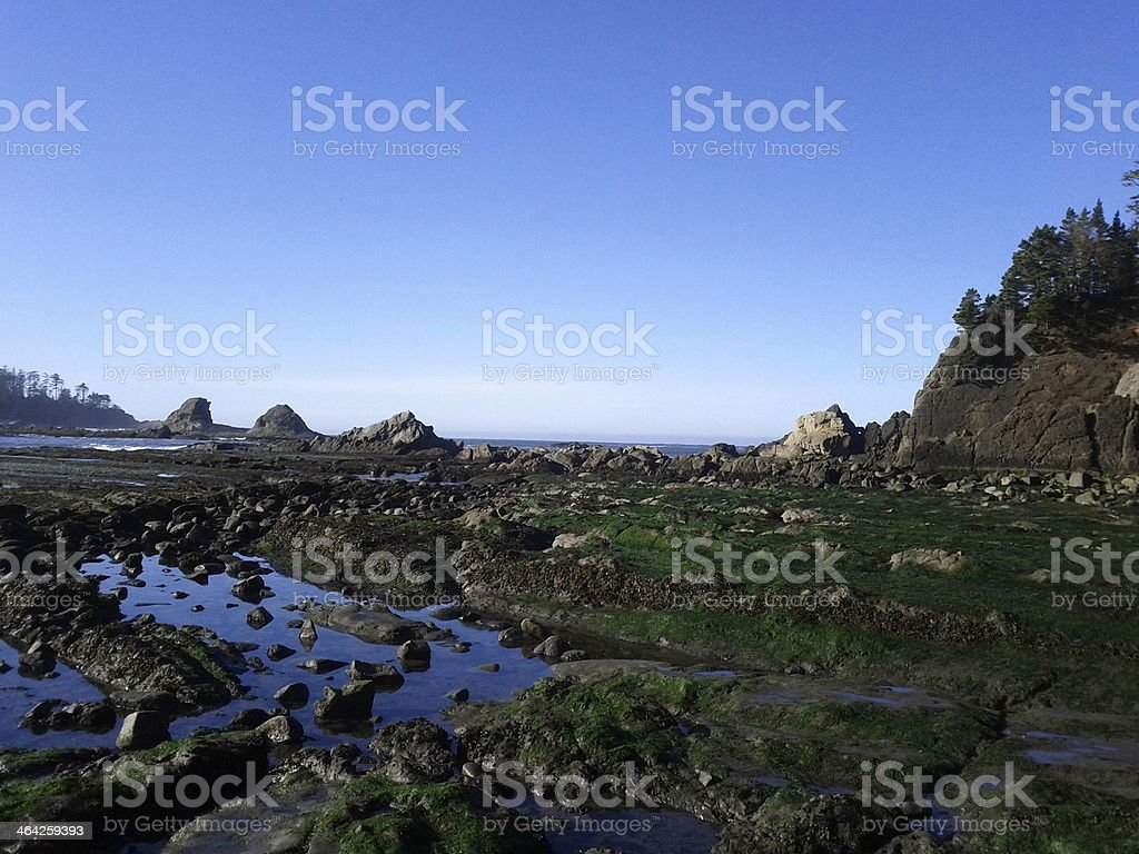 Moss covered rocks, Sunset Bay stock photo