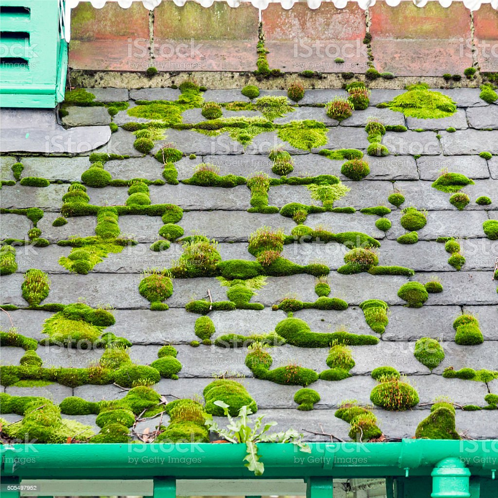 Moss Covered Slate Roof stock photo
