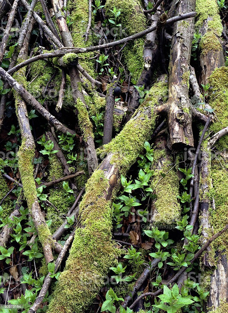 Moss covered tree branches stock photo