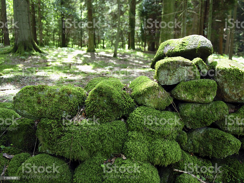 Moss Covered Wall royalty-free stock photo
