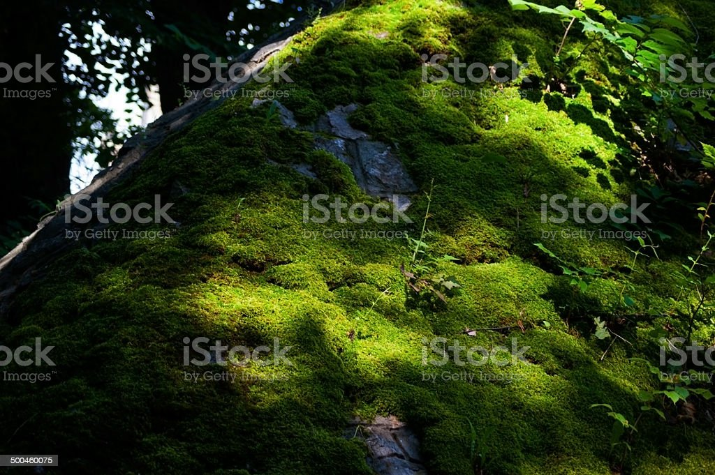 Moss Covered Wall stock photo