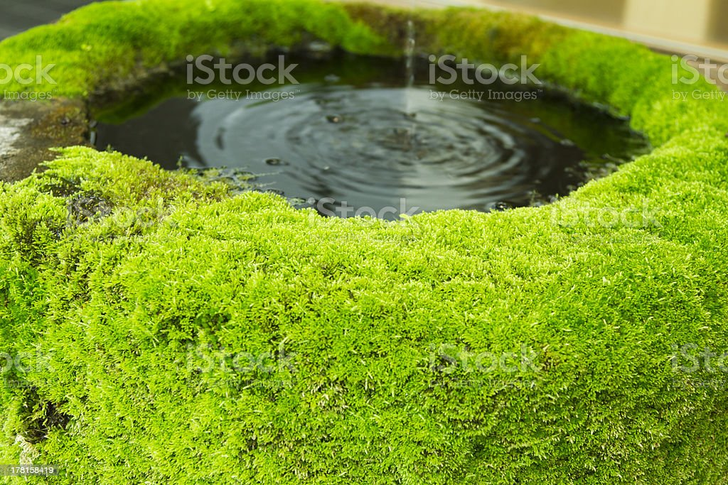 Moss Covered Water Basin stock photo