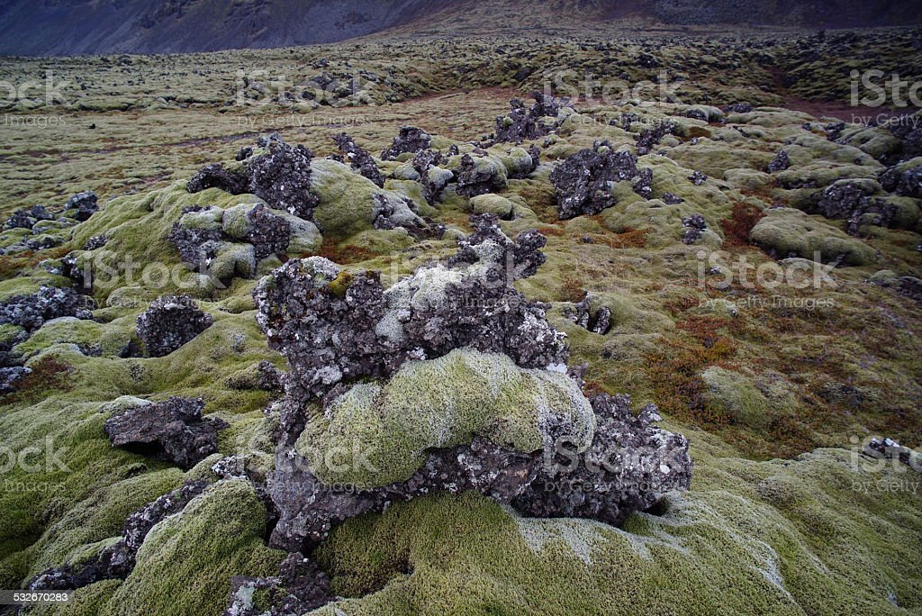 Moss covers volcanic rock, Iceland stock photo