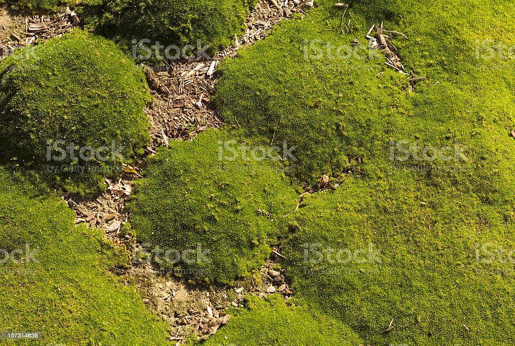 Moss detail stock photo