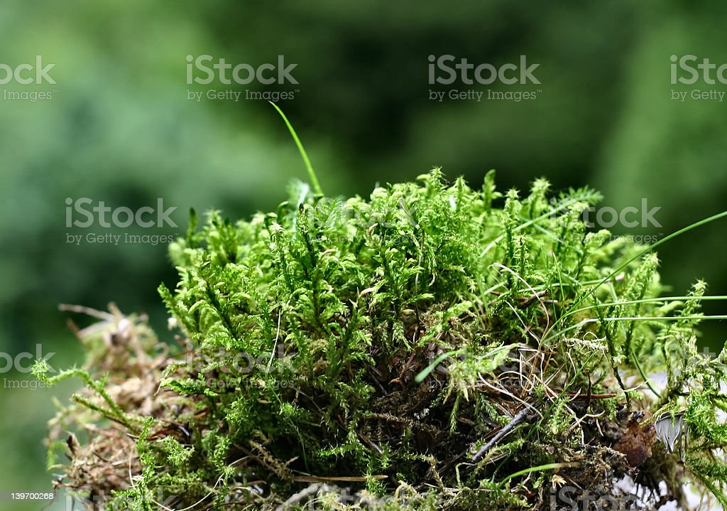 moss details royalty-free stock photo