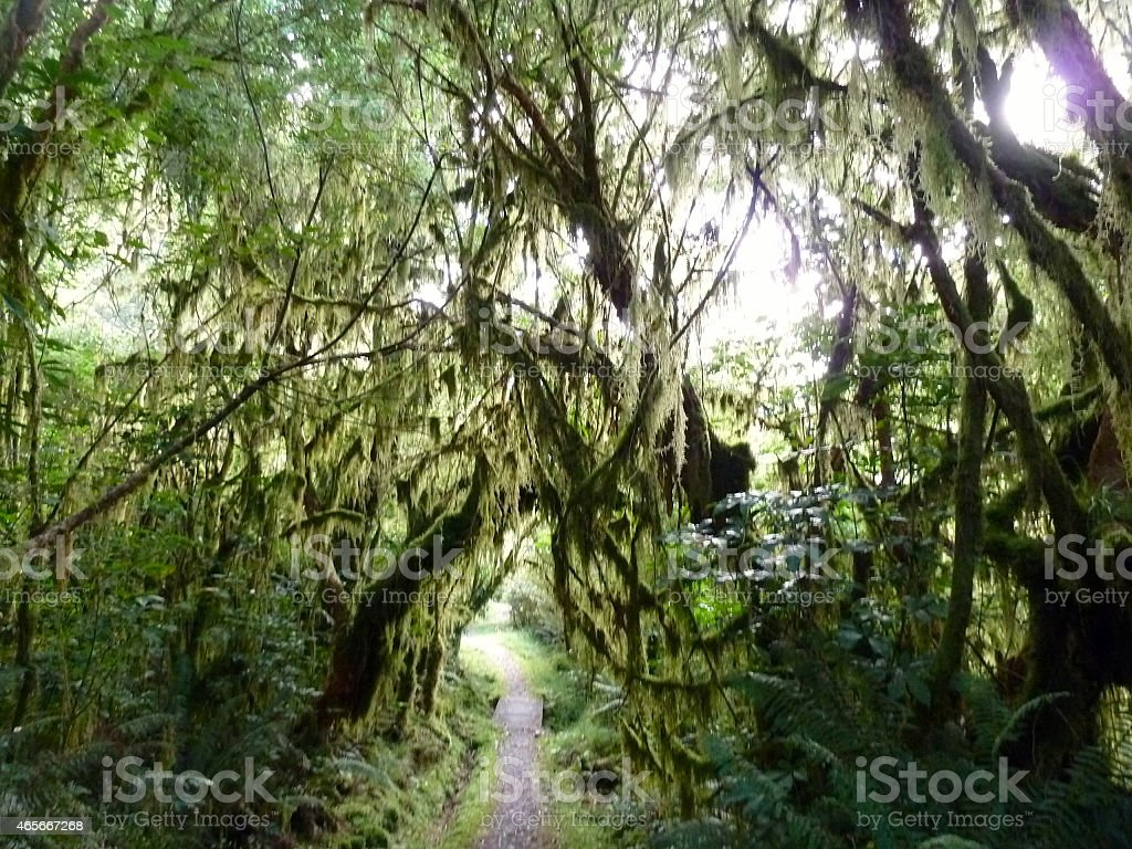 Moss Drapped Trees stock photo