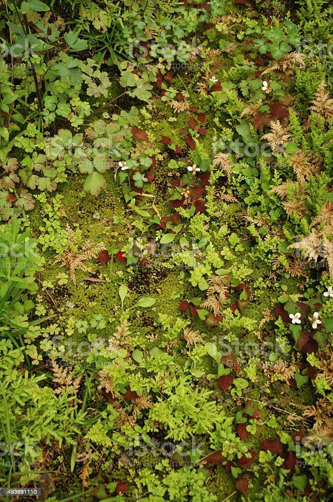 moss field stock photo
