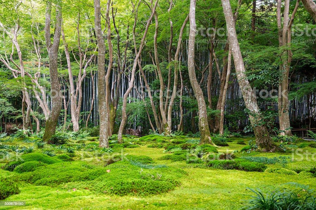 Moss garden view in Arashiyama, Kyoto stock photo