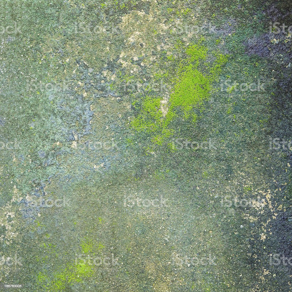 moss growing on the concrete floor royalty-free stock photo