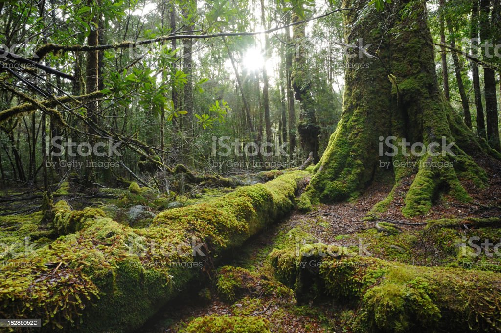 Moss growing on trees and fallen trunks in a forest stock photo