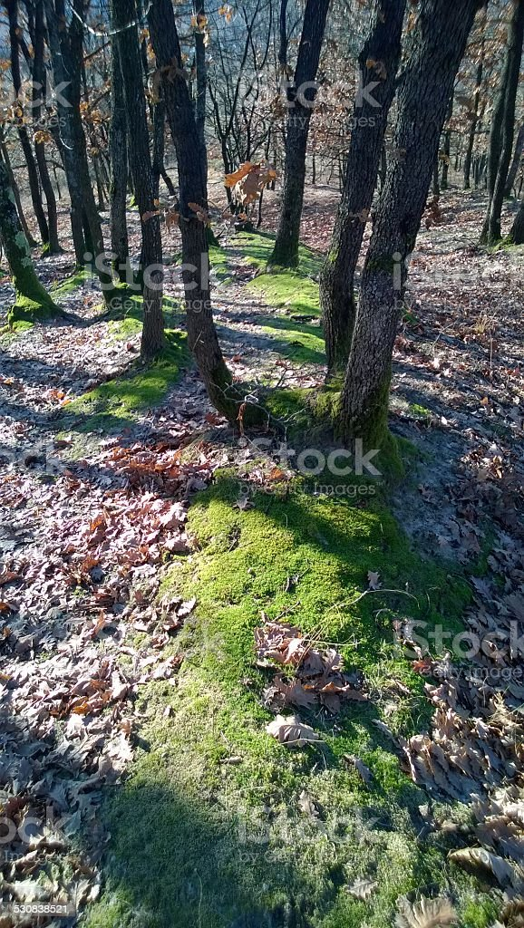Moss in a forest royalty-free stock photo