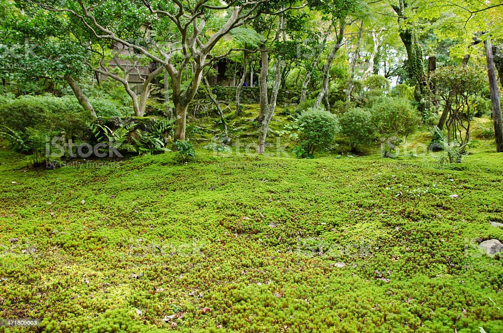 Moss in a japanese garden royalty-free stock photo