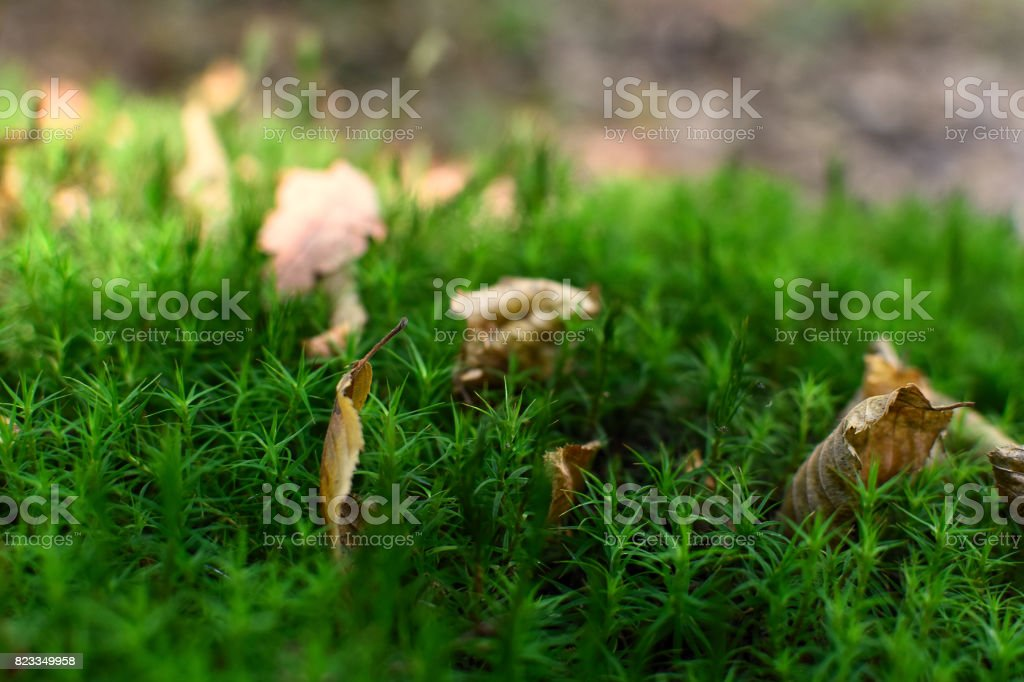 moss in forest stock photo