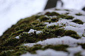 moss in the bliss tree, Park, winter, background, closeup
