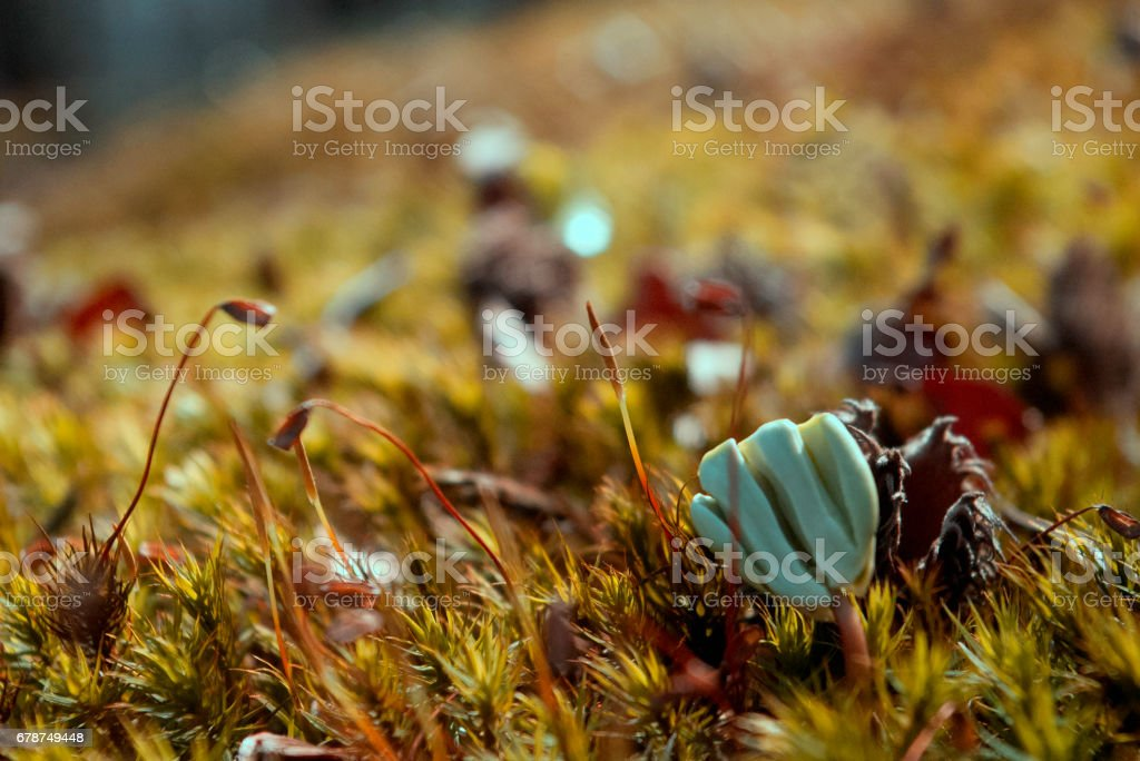 Moss in the forest, beautiful nature, moss macro, stock photo