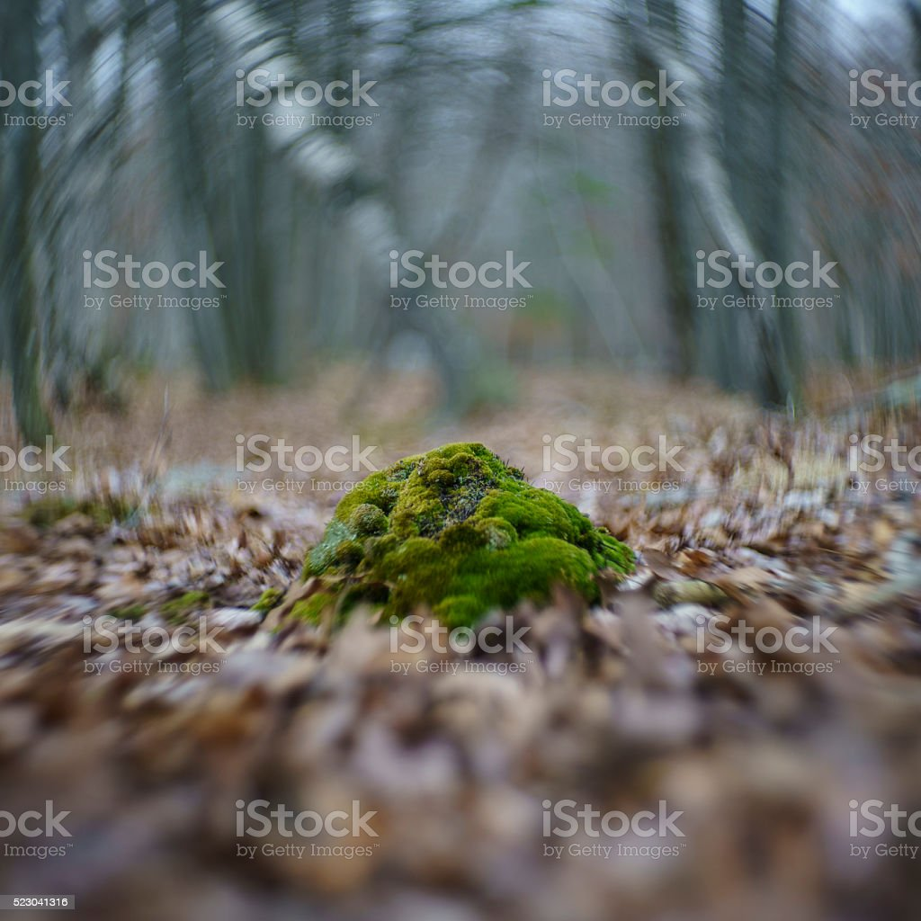 Moss in the forest in spring, Pennsylvanya, Poconos stock photo