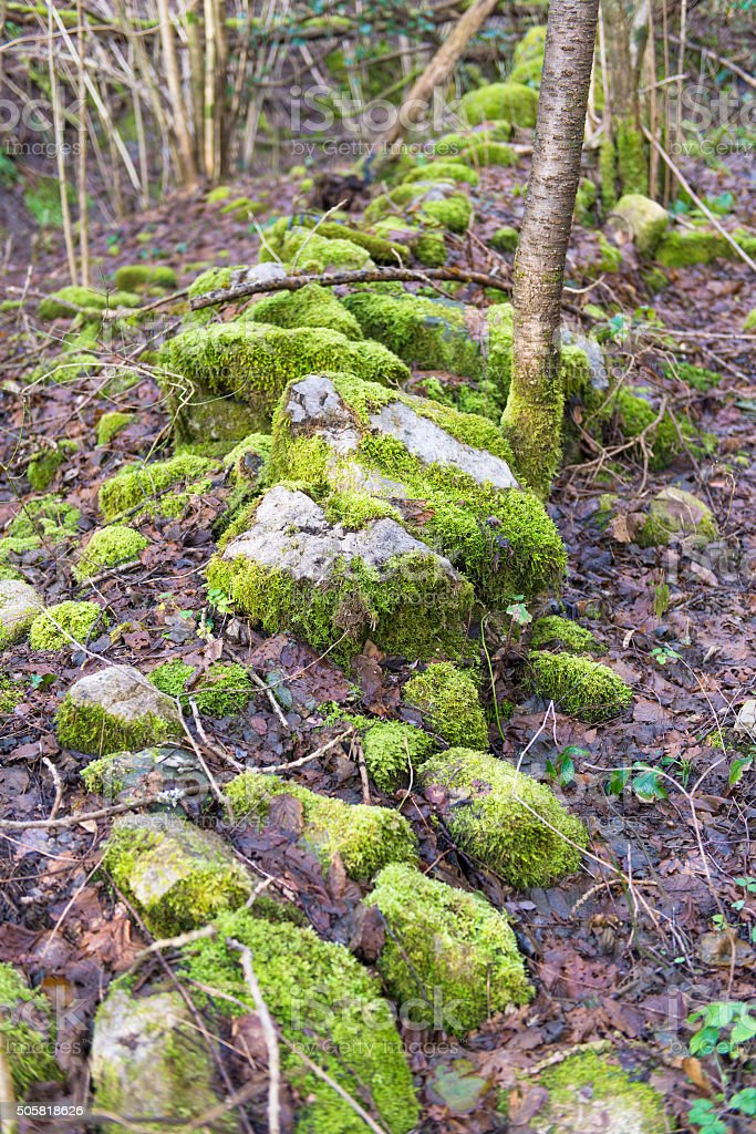 Moss in the forest stock photo