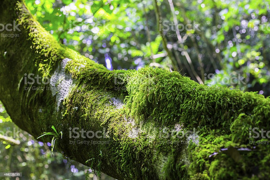 Moss in the Woods stock photo