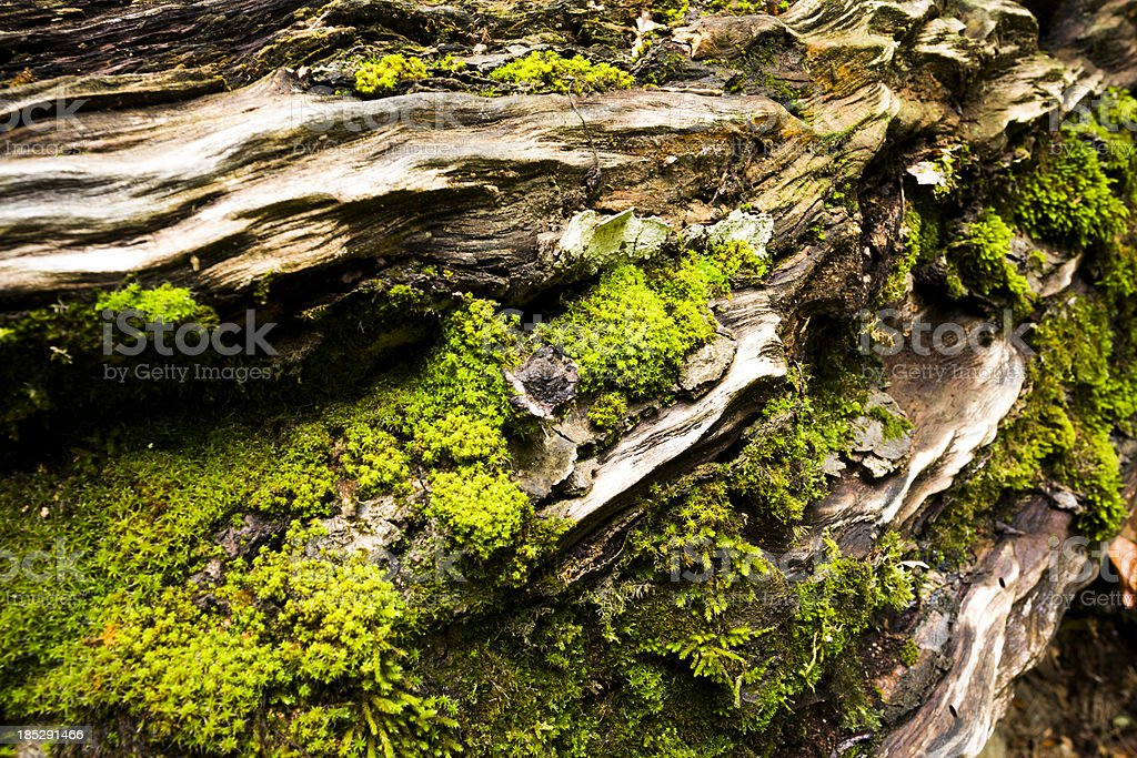moss in tree royalty-free stock photo