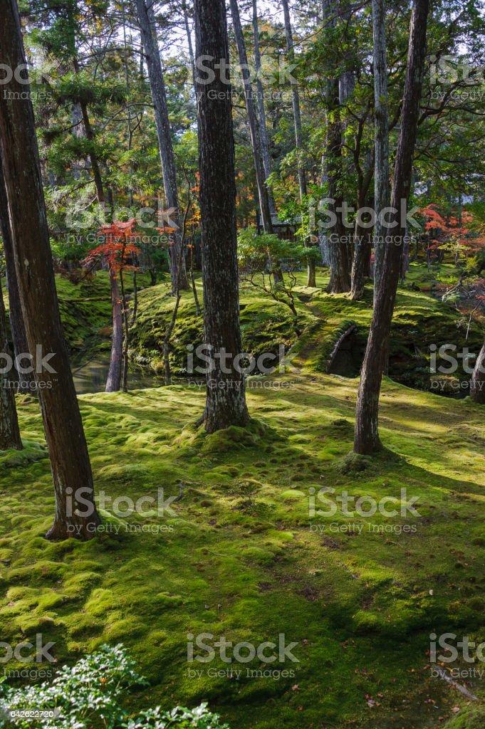 Moss Islands in Garden stock photo