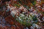 Moss, Lichen, and Grass, Mount Magazine, Arkansas