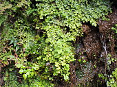 Moss, lichen and liverwort growing on the rock
