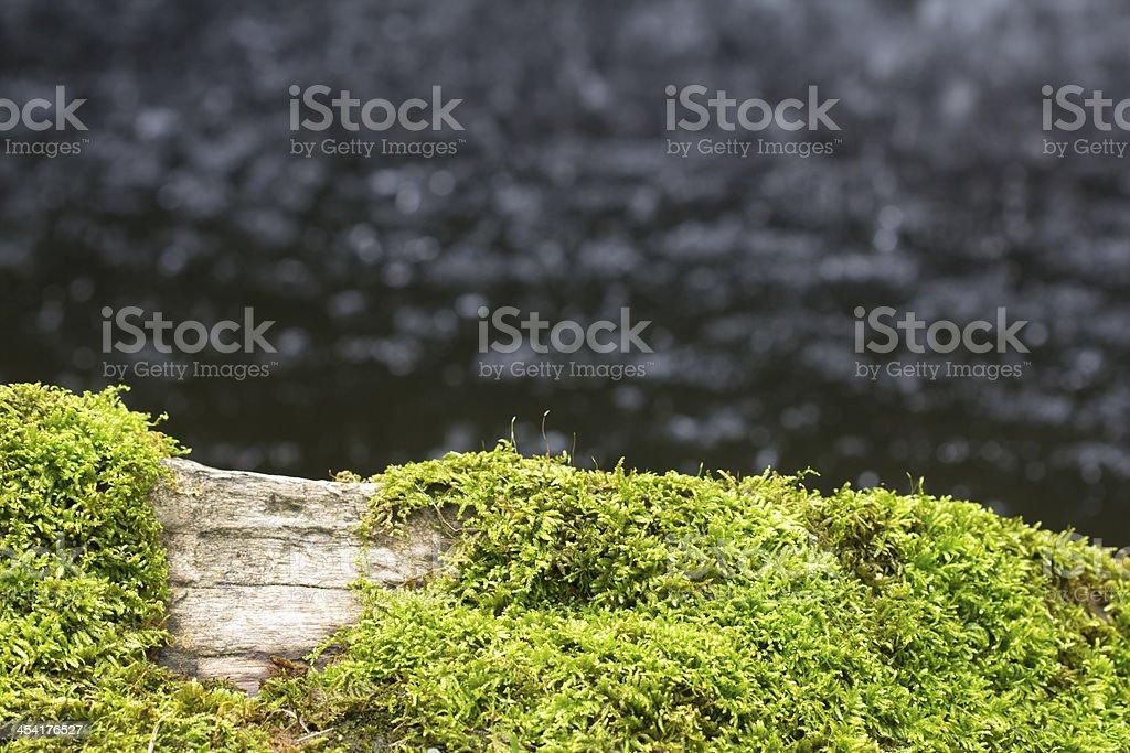 moss near stream stock photo