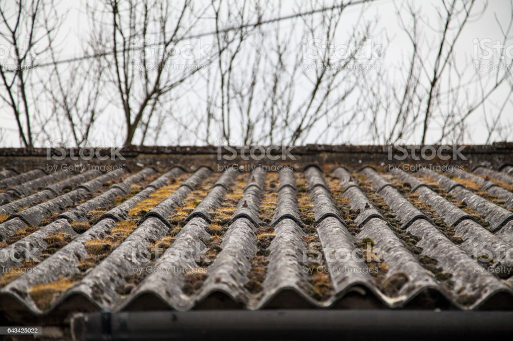 Moss on a currugated roof stock photo