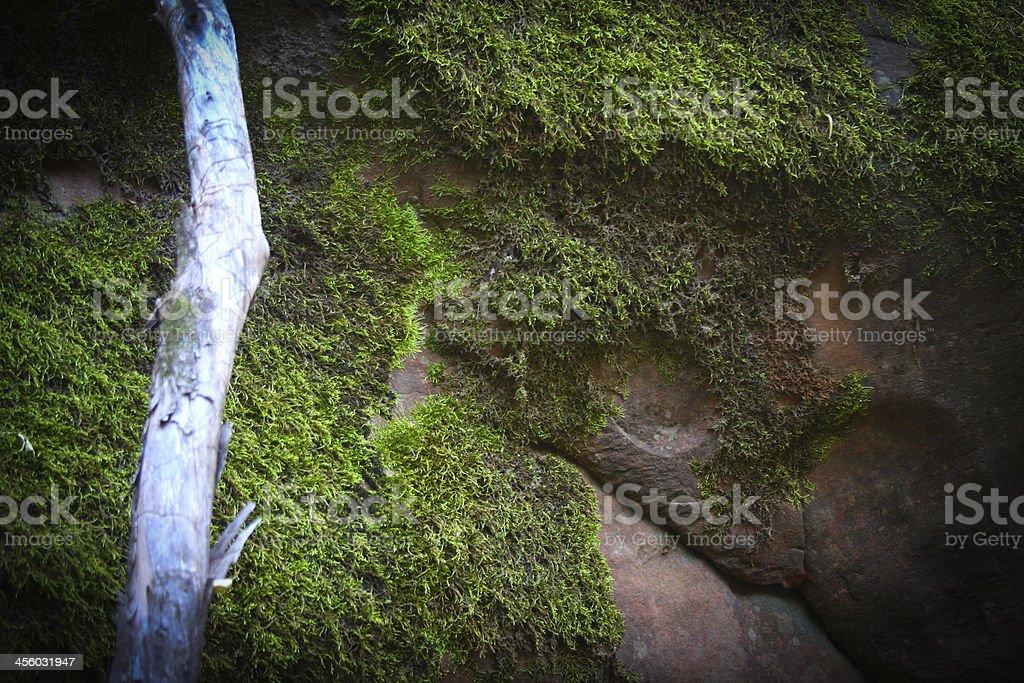 Moss na Skale zbiór zdjęć royalty-free