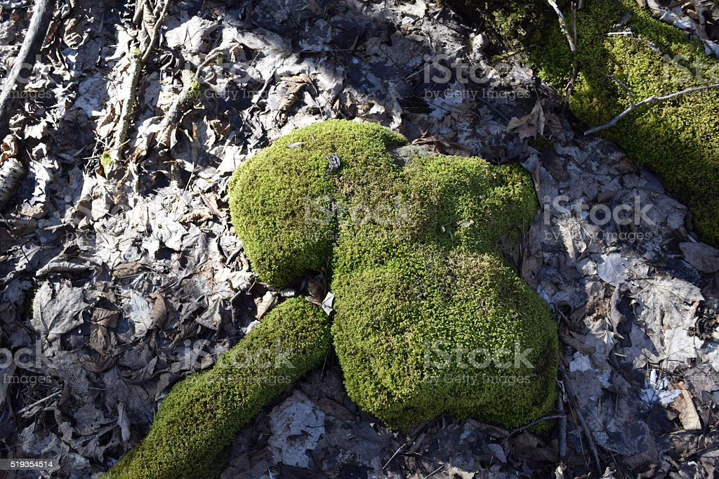 Moss on a Rock stock photo