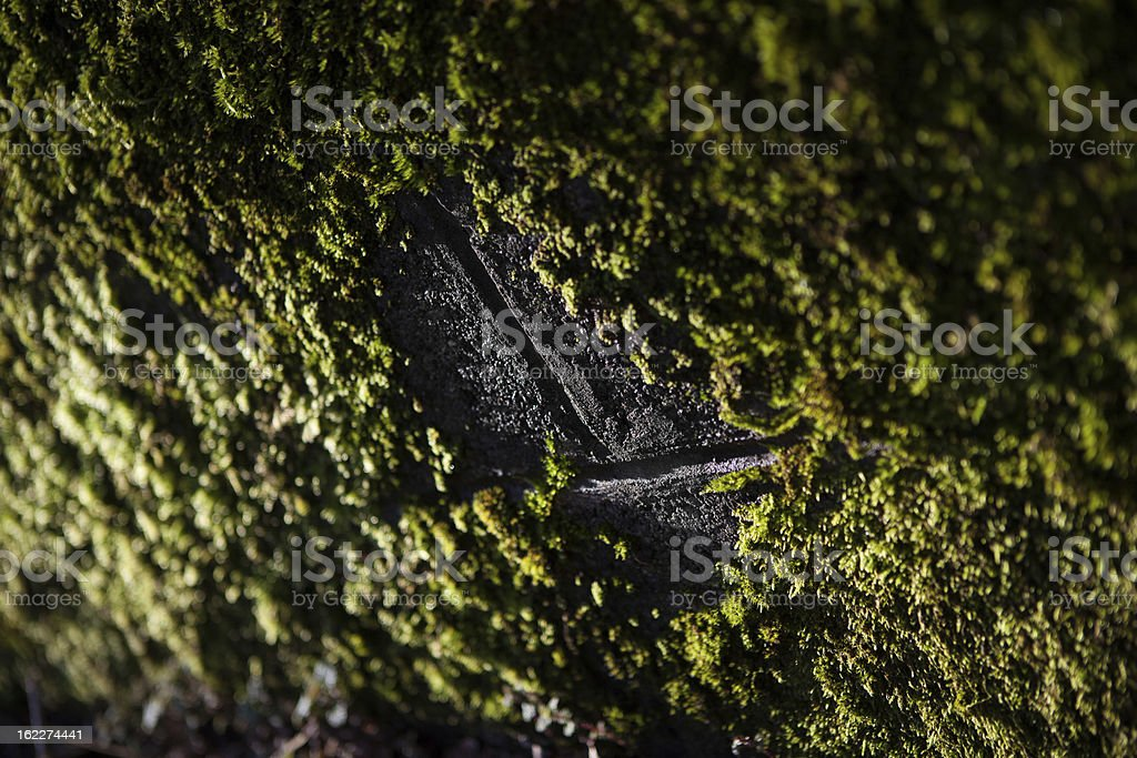 Moss on a stone wall royalty-free stock photo