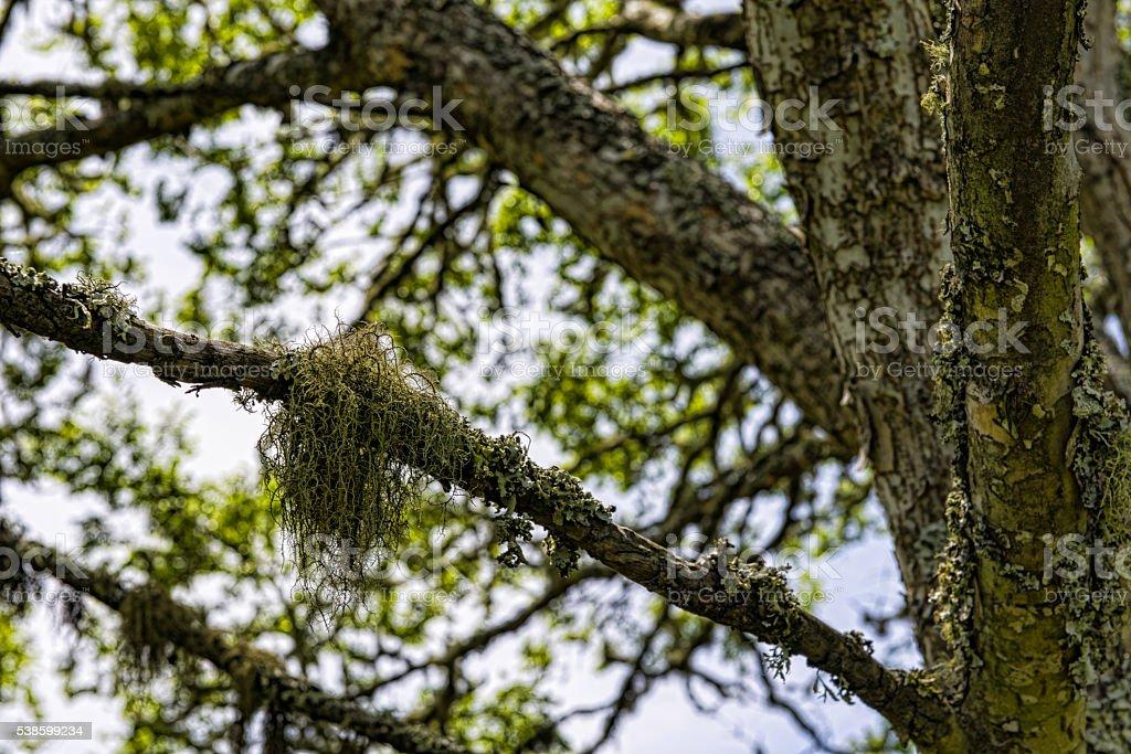 Moss on a tree stock photo